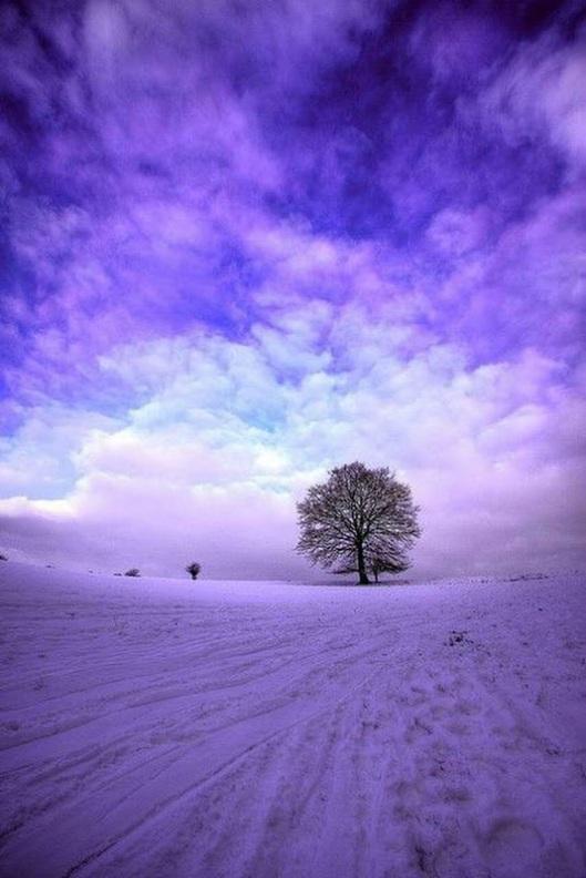 purple2